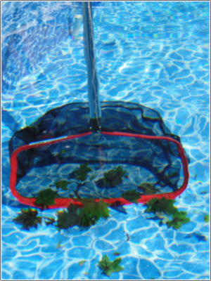 Wide Mouth Pool Cleaning Rake