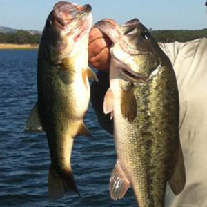 top water bass lures