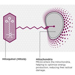 MitoQ Graphic