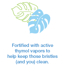 steripod toothbrush protector family benefit thymol