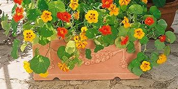 jewel mix nasturtium seed mix for planting out doors