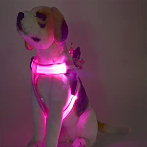 led harness pink