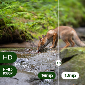 16 Megapixel Image and 1080P Video