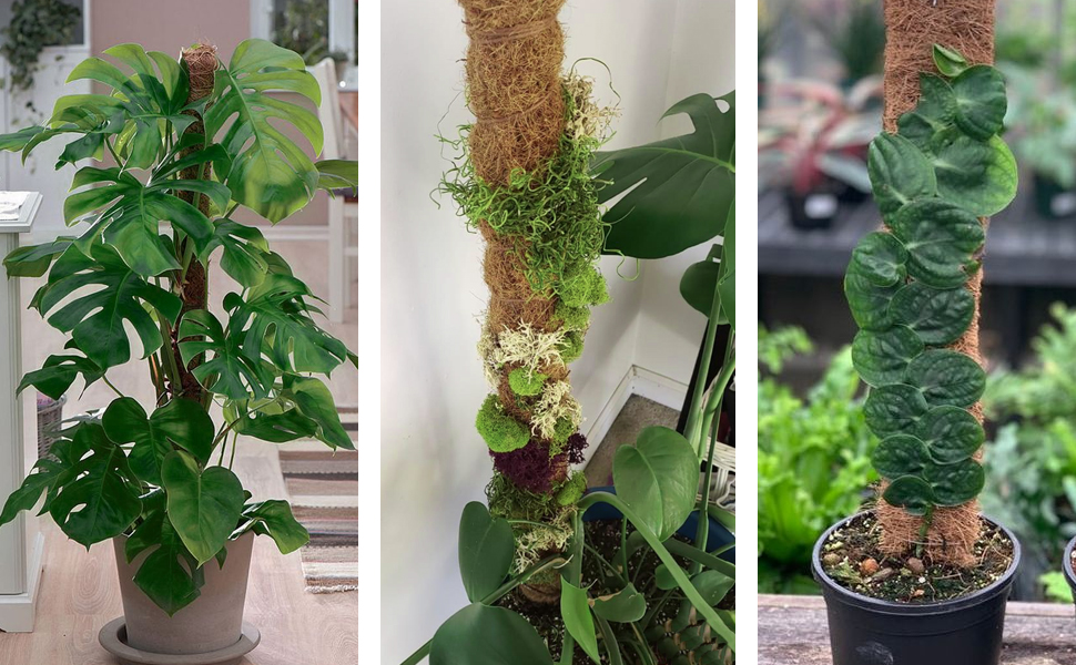 COSYLAND coir totem pole is your ideal choice for various indoor climbing plants and creepers.
