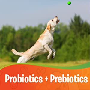 probiotics for dogs prebiotics for dogs dog probiotic