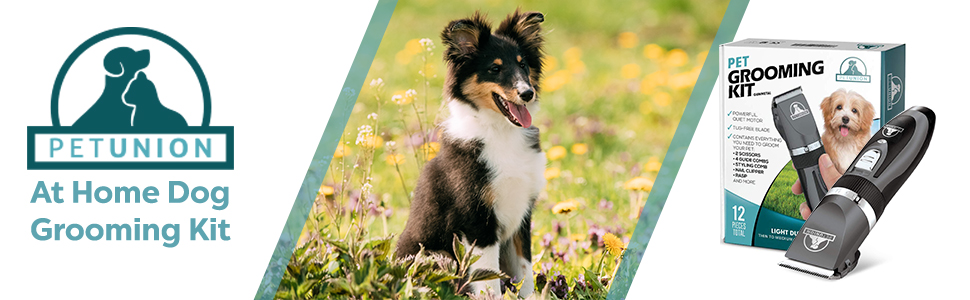 at home dog grooming kit