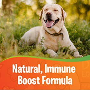 immune boost pet immune boost dog immune boost dog probiotic probiotics for dogs