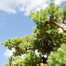 liquid bonsai plant fertilizer tree food