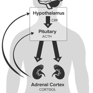 ATP Cort RX - Stress Supplement - Tumeric