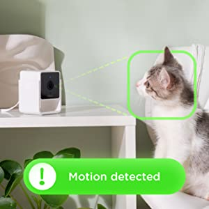 Kitten pet camera monitoring motion sound detection