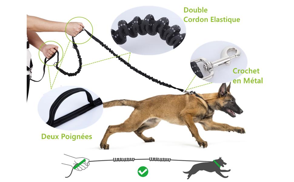 laisse de jogging chien