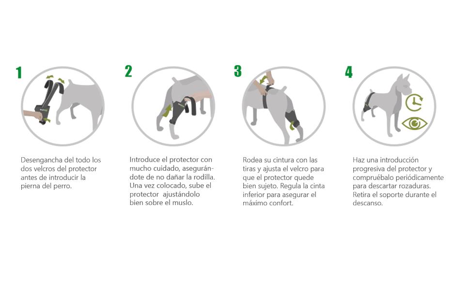 Ortocanis Protector de Rodilla - Talla XL - Derecha: Amazon.es ...