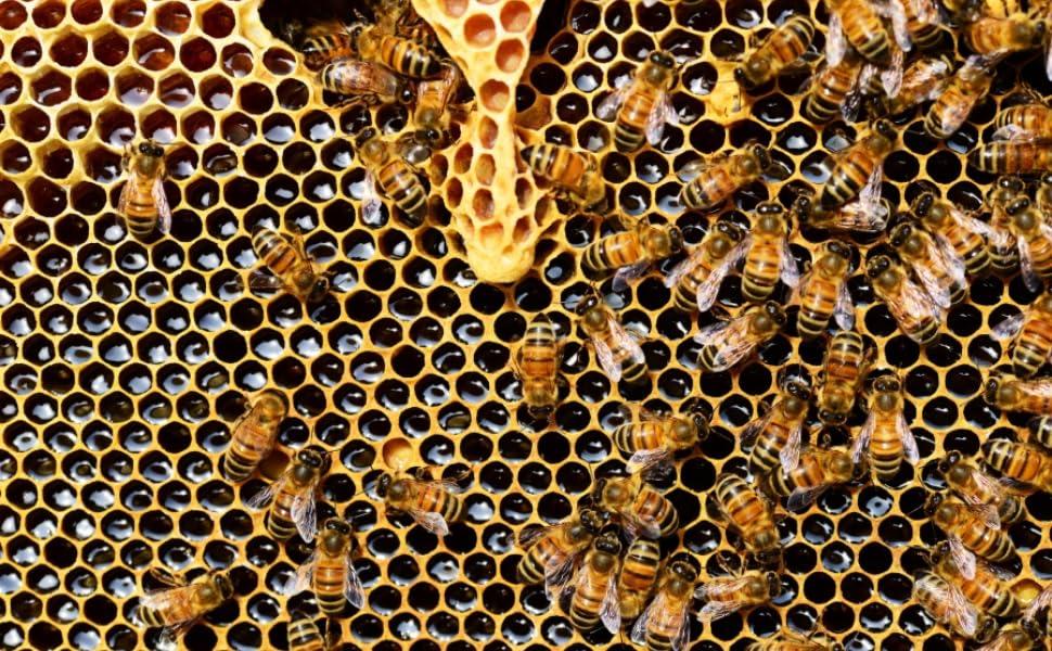 beesworks