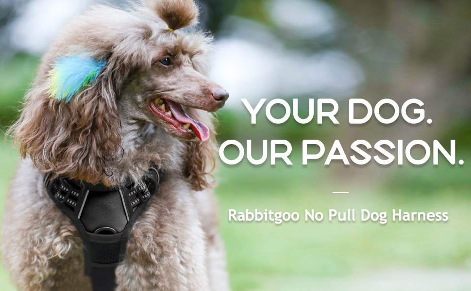 Amazon Com Rabbitgoo Dog Harness No Pull Pet Harness With 2 Leash Clips Adjustable Soft Padded Dog Vest Reflective No Choke Pet Oxford Vest With Easy Control Handle For Small Dogs Black S Chest