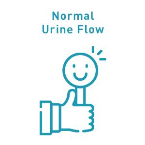 normal urine flow regulates