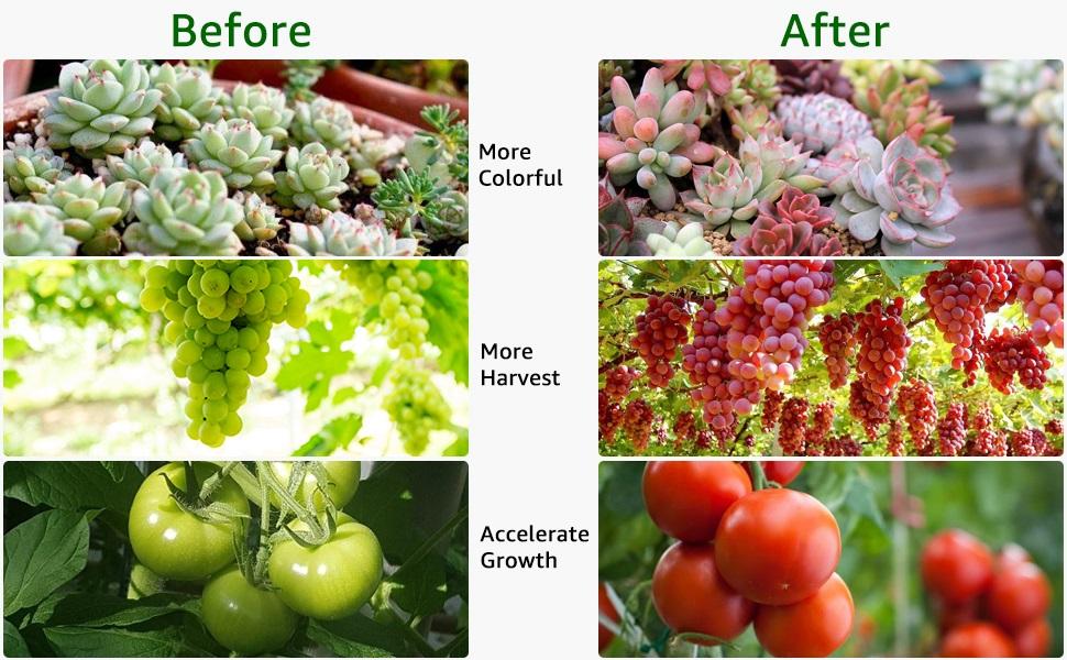 hydroponic grow light
