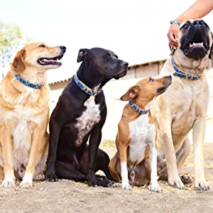 dogs in mucky pup dog collars friendshipcollars