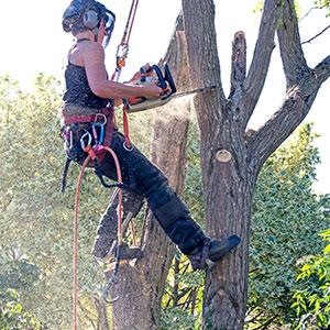 tree climbing spikes