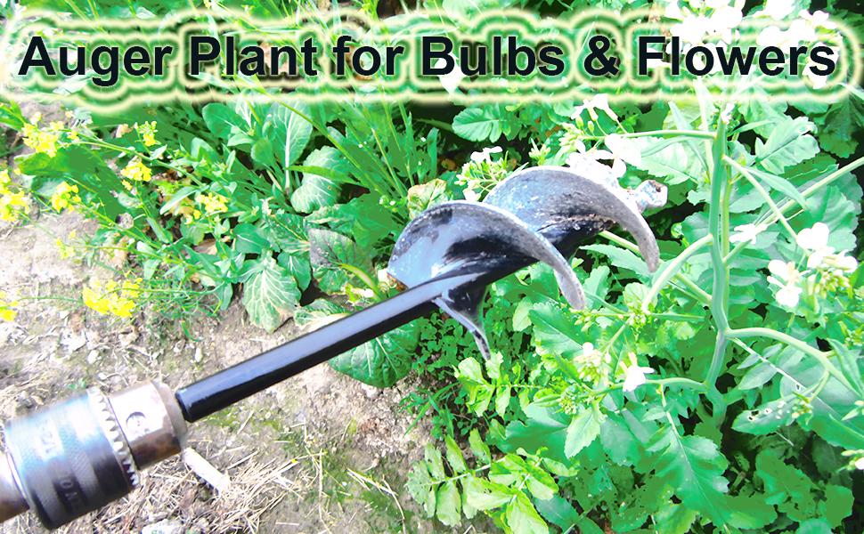 plant bulb