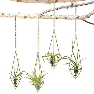 Geometric Planter Display