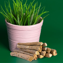 Ashwagandha plant image with it's bark on green background