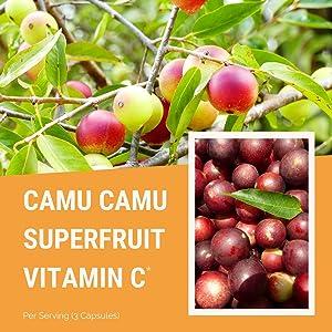 camu camu powder organic natural vitamin c best vitamin c serum supplement pills capsules immune
