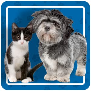 canine diarrhea remedy diarrhea in dogs dogs with loose stools how to treat diarrhea in dogs