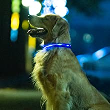 high visible collar rechargeable led dog collar light up glow in the dark dog collars