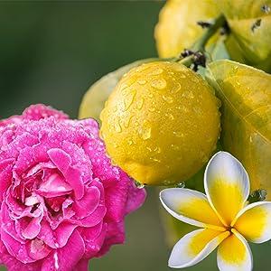 Geur: Citroen, roos, jasmijn