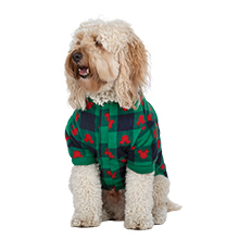 Golden dog in matching green and red mickey pajamas on white background