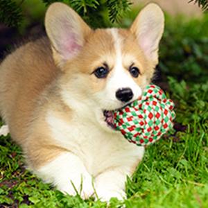 cotton balls for dog