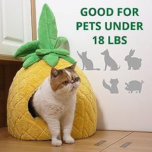 petnpurr pineapple pet cave
