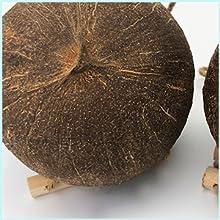 High quality coconut