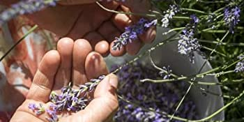 Highland-grow Perfect holiday gift sachets Great aromatic fragrance of lavender