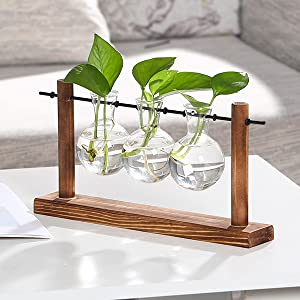 office plants live glass containers for plants vases for plants table top plantsgarden plant vases
