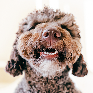 Our dog breath freshener is sure to get pups smiling. After all, fresh breath means more cuddles!