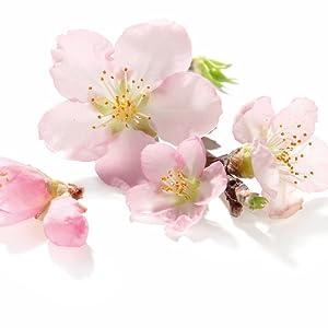 Almond Blossom Plant