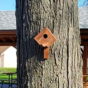 Our small Wakefield birdhouse outside on a tree farther away