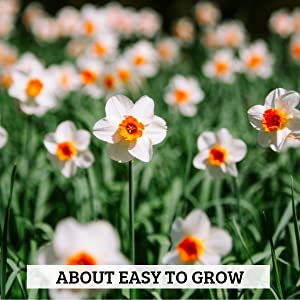 about easy to grow