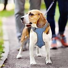 No Pull Dog Vest Harness