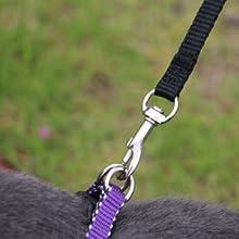 leash for small dogs,small dog leash,cat leash,leash dog