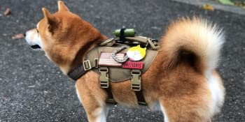 tactical small dog vest harness