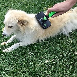 Brosse de toilettage pour chien, chat, petite, grande, poils longs, poils courts