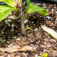 liquid fiddle leaf fig fertilizer ficus food indoor plants best all purple fertilizers