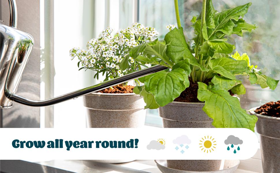 indoor plant seeds indoor gardening kit grow your own herbs indoor kit indoor activities for kids