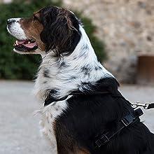 Happilax Arnés para Perros Grandes, Reflectante y Ajustable, Talla ...