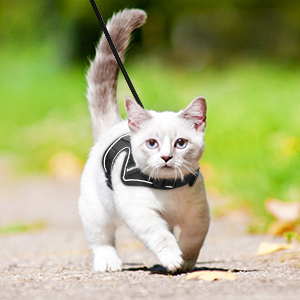 cat harness with leash set