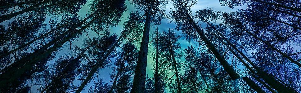 Nordic forest berries wild vitamins