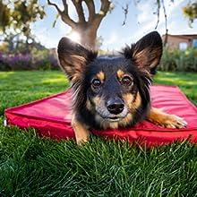 barkbox outdoor bed