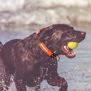 100% étanche led Collier de chien